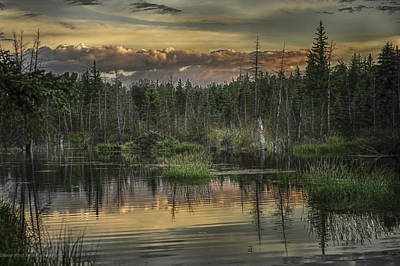 Photograph - Beaver Pond At Sunset by Patricia Dennis
