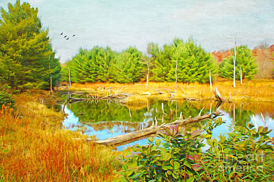 Beaver Wall Art - Photograph - Beaver Pond by Laura D Young