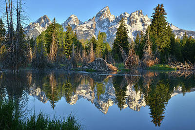 Photograph - Beaver Pond Reflection In Grand Teton by Ray Mathis