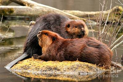 Photograph - Beaverly Love by Heather King