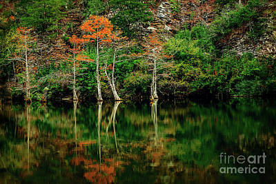 Beaver's Bend Color Explosion Art Print by Tamyra Ayles