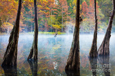 Beaver Photograph - Beavers Bend Cypress Grove by Inge Johnsson