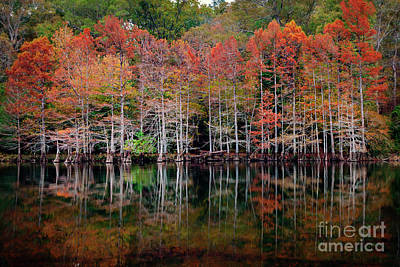 Beaver's Bend Cypress Soldiers Art Print by Tamyra Ayles