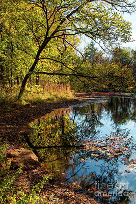 Art Print featuring the photograph Beaver's Pond by Iris Greenwell