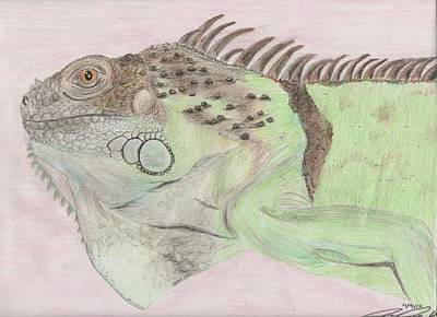 Iguana Drawing - Beavis The Iguana by Joanna Aud