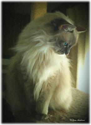 Longhair Cats Photograph - Bebe by Lynn Andrews