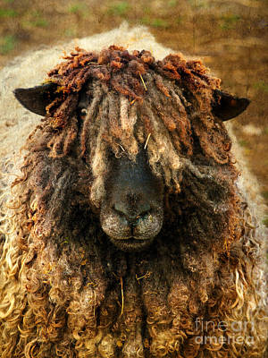 Looking At Camera Mixed Media - Because Ewe Are Worth It by Linsey Williams