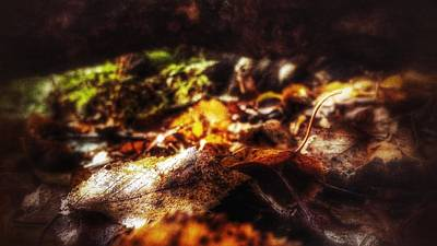 Photograph - Beckett by Isabella F Abbie Shores