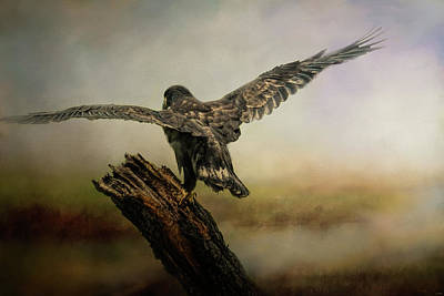 Photograph - Becoming The Boss Bald Eagle Art By Jai Johnson by Jai Johnson