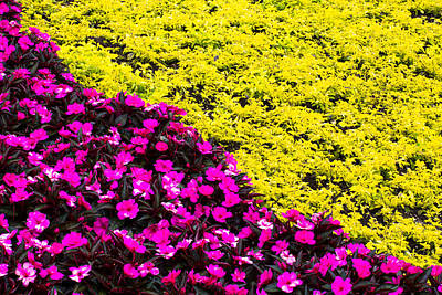 Photograph - Bed Of Flowers - 1 by Nicholas Evans