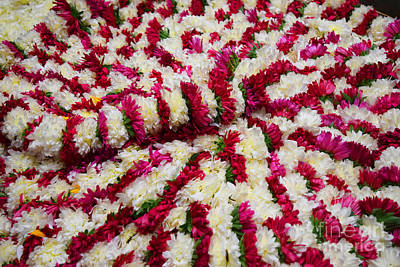 Photograph - Bed Of Flowers by Mini Arora