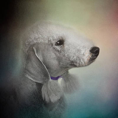 Photograph - Bedlington Terrier by Jai Johnson