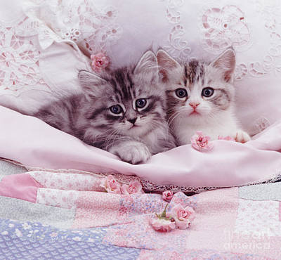 Photograph - Bedtime Kitties by Warren Photographic