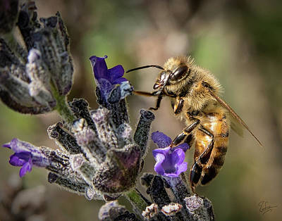 Photograph - Bee 2 by Endre Balogh