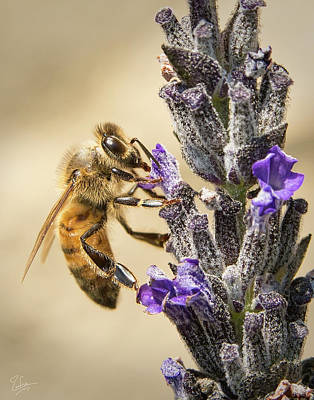 Photograph - Bee 5 by Endre Balogh