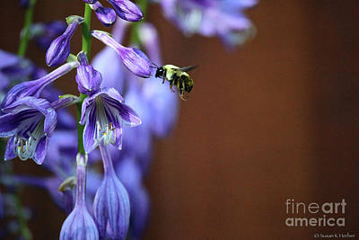 Photograph - Bee Active by Susan Herber