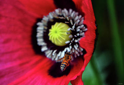 Photograph - Bee And A Poppy 007 by George Bostian
