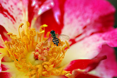 Designers Choice Photograph - Bee And Bee by Don  Wright