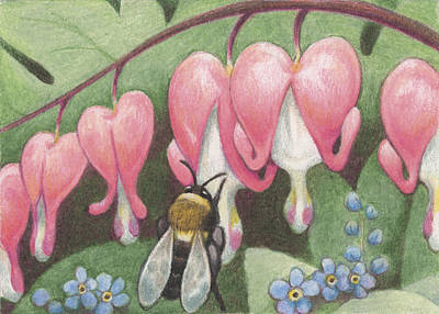 Animals Drawings - Bee And Bleeding Heart by Amy S Turner
