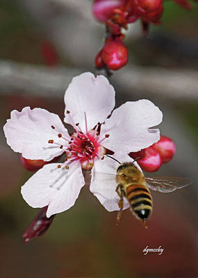 Bee And Blossom 9592 Art Print by David Mosby