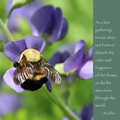 Photograph - Bee And Budda Quote 2 by Heidi Hermes