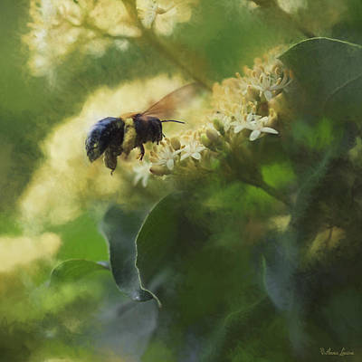 Digital Art - Bee And Elderberry by Anna Louise
