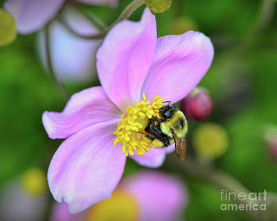Photograph - Bee And Japanese Anemone by Kerri Farley