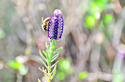 Photograph -  Bee And Lavender by Debby Pueschel