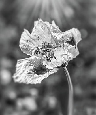 Photograph - Bee And Poppy Flower Black And White by Jennie Marie Schell