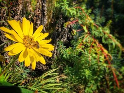 Photograph - Bee And Yellow Flower by Henri Irizarri