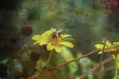 Photograph - Bee And Yellow Wildflower 5651 Idp_2 by Steven Ward