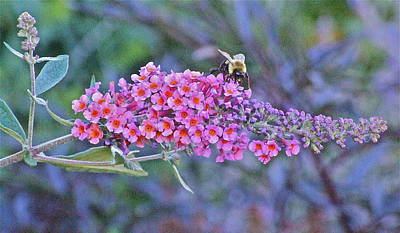 Photograph - Bee At Brunch by Janis Nussbaum Senungetuk
