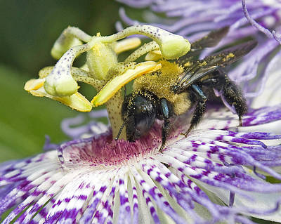 Art Print featuring the photograph Bee At Work by Alan Raasch