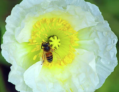 Photograph - Bee At Work by Inspirational Photo Creations Audrey Woods