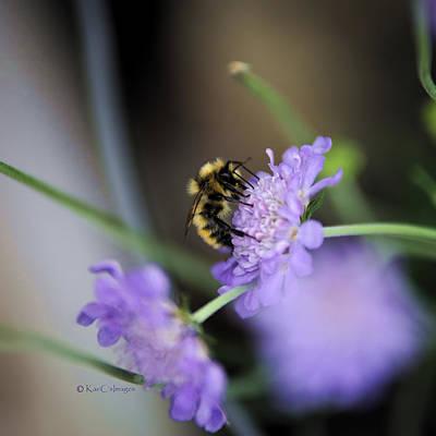 Photograph - Bee At Work by Kae Cheatham