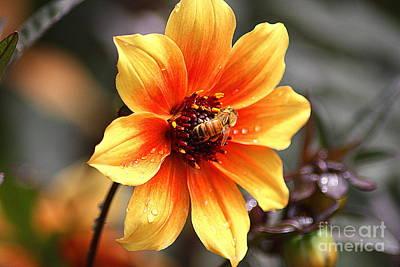 Apocrita Photograph - Bee At Work by Patti Whitten