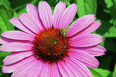 Photograph - Bee At Work2 by Inspirational Photo Creations Audrey Woods