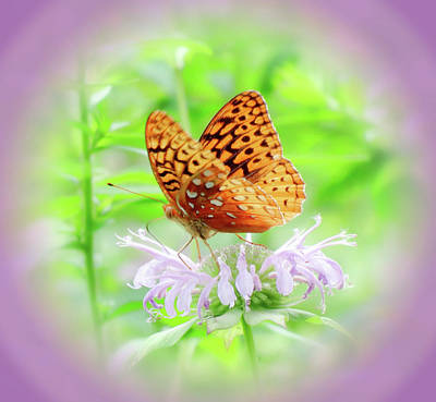 Photograph - Bee Balm Fritillary - Vignette by MTBobbins Photography