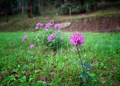 Photograph - Bee Balm In The Mountains by Mary Lee Dereske