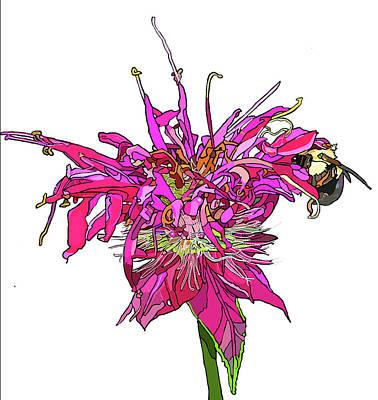 Bee Balm Art Print