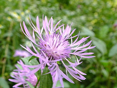 Photograph - Bee Balm by Peggy King