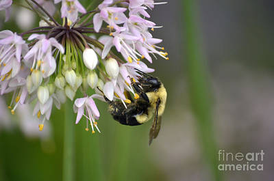 Photograph - Bee Bounty by Deb Halloran