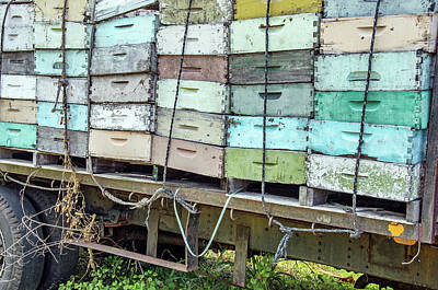 Photograph - Bee Boxes Hawaii Kine by David Lawson