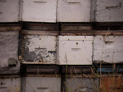 Photograph - Bee Boxes by Leslie Montgomery