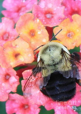 Bee On Flower Photograph - Bee Card by Carol Groenen