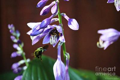 Photograph - Bee Choosey by Susan Herber
