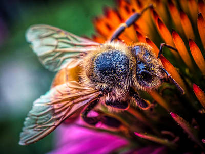 Photograph - Bee Close Up by Lilia D