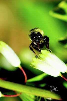 Photograph -  The Bees Knees  by Meta Gatschenberger