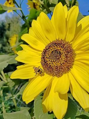 Photograph - Bee-dazzled by Amanda Smith