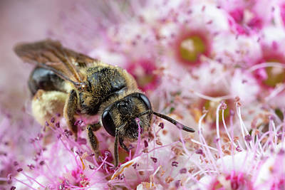 Photograph - Bee Doing Bee Things by Brian Hale